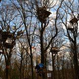 Wald retten - Kohle stoppen! Mit dem Bus zur Demo für den Hambacher Forst