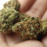 Streit um Cannabisprodukte: Grüne kritisieren Polizei und Staatsanwaltschaft