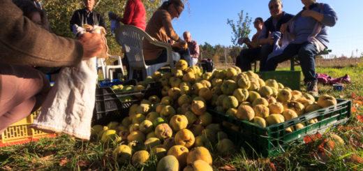 Solidarische Landwirtschaft Mannheim-Ludwigshafen - Was steht an?