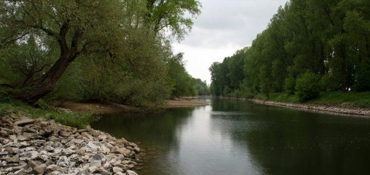 Rheindammsanierung: Hochwasserschutz braucht Solidarität, aber keinen Kahlschlag
