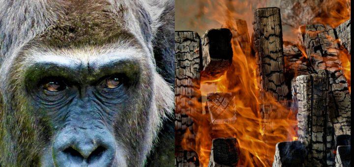 Brand im Krefelder-Zoo – wie ist es im Rhein-Neckar-Raum in puncto Tierschutz bestellt?